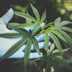 CBD Wholesale: How to Become Part of the Industry