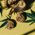 The Most Popular CBD Products, Their Benefits, And How To Use Them